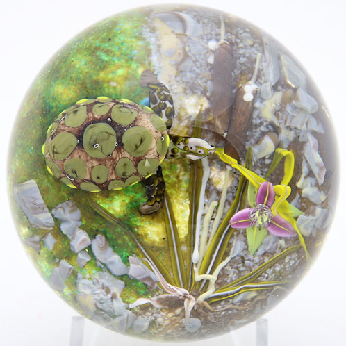 Jim D'Onofrio Colourful Turtle Pond Orchid Art Glass Paperweight