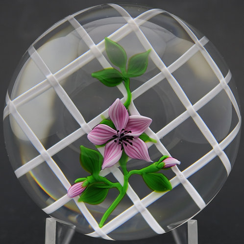 Victor Trabucco Pink Flower Vine Over Latticino Art Glass Paperweight