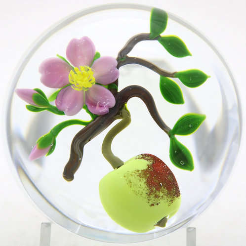 Victor Trabucco Ripening Apple & Blossoms on Branch Art Glass Paperweight