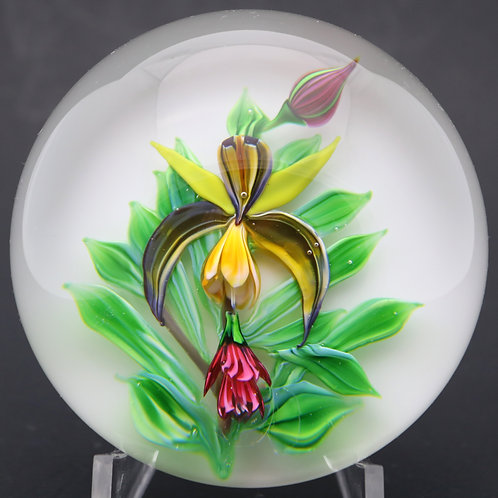 Large Saint Louis Vivid Ophrys Exotic Orchid Art Glass Paperweight COA