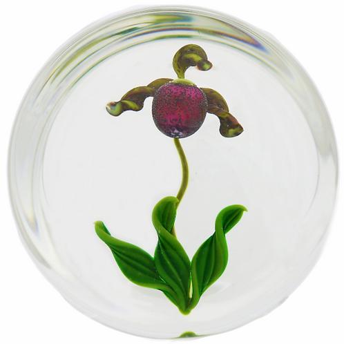 Gordon Smith Lady Slipper Orchid Flower Art Glass Paperweight