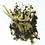 Thumbnail: Spectacular Paul Stankard  Art Glass Botanical Assemblage Sculpture Studio Block