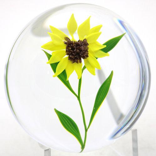 Paul Stankard Experimental Daisy Art Glass Paperweight