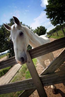 paard_09321-687x1030.jpg