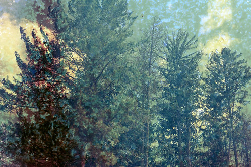 Matted Print of Impure Forest