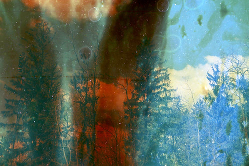 Matted Print of Impure Red & Blue Trees