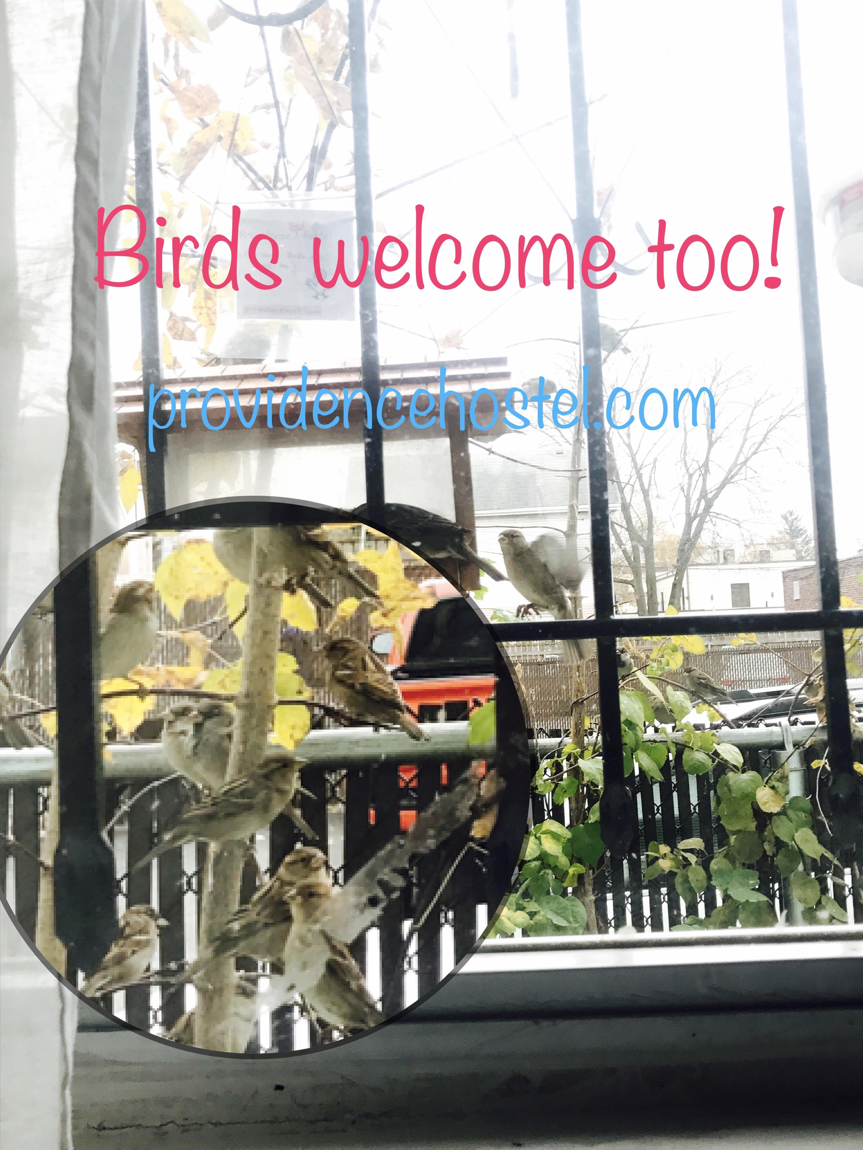 hostel birds