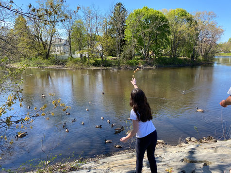 Feeding ducks at the Mill Pond in Danvers