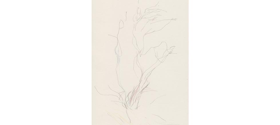 Untitled (Ikara/Wilpena Sketches)