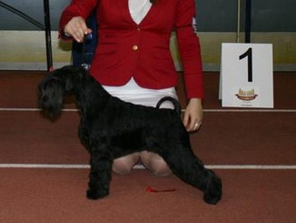Vera third best black bitch showyear 2013