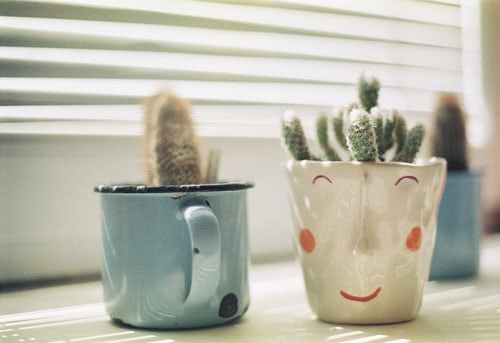 Mugs with Cacti in them