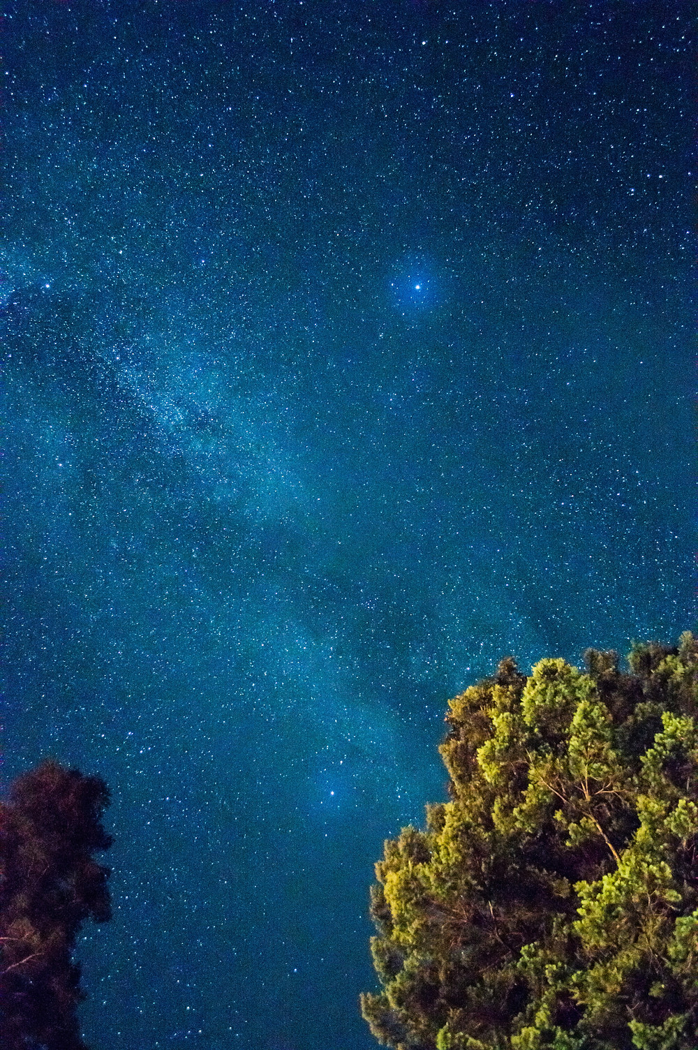 Nightsky with Trees in the foreground
