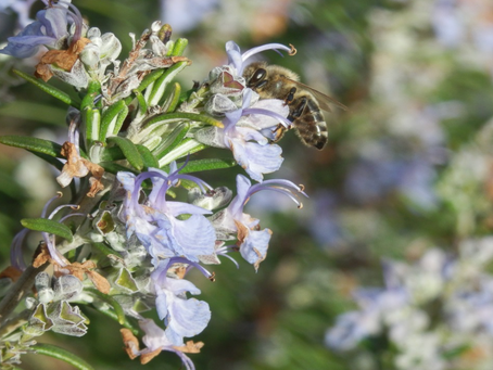 A Quick Guide To Starting Your Own Apiary