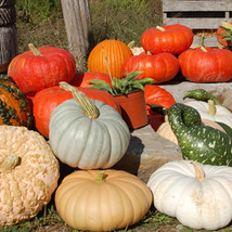 We grow a variety of ornamental and edible squash