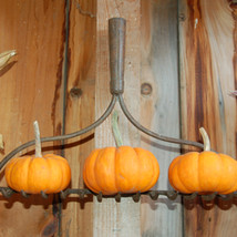 Gourds and miniature pumpkins for decorating