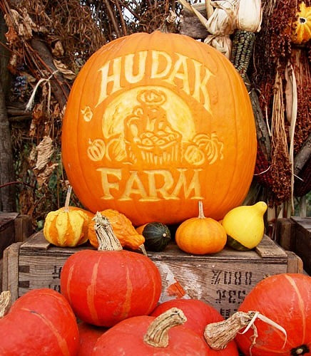 Thousands of pumpkins to choose from each fall