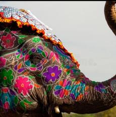 elephant-indian.jpeg