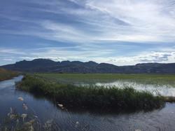 Reisfelder von Pego