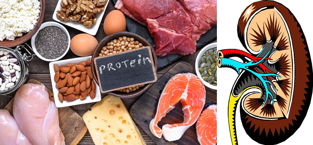 Proteine fanno male