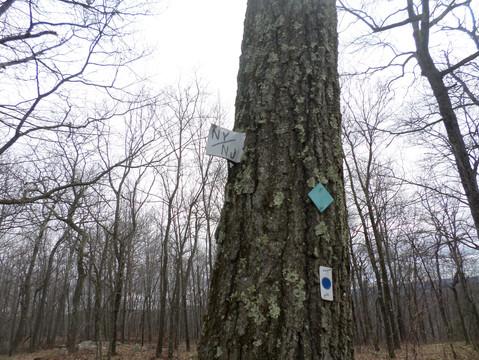 Sterling Ridge Trail