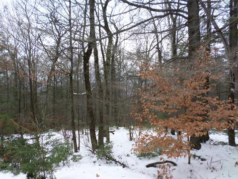Overlook Mountain near Woodstock, NY - The Catskills