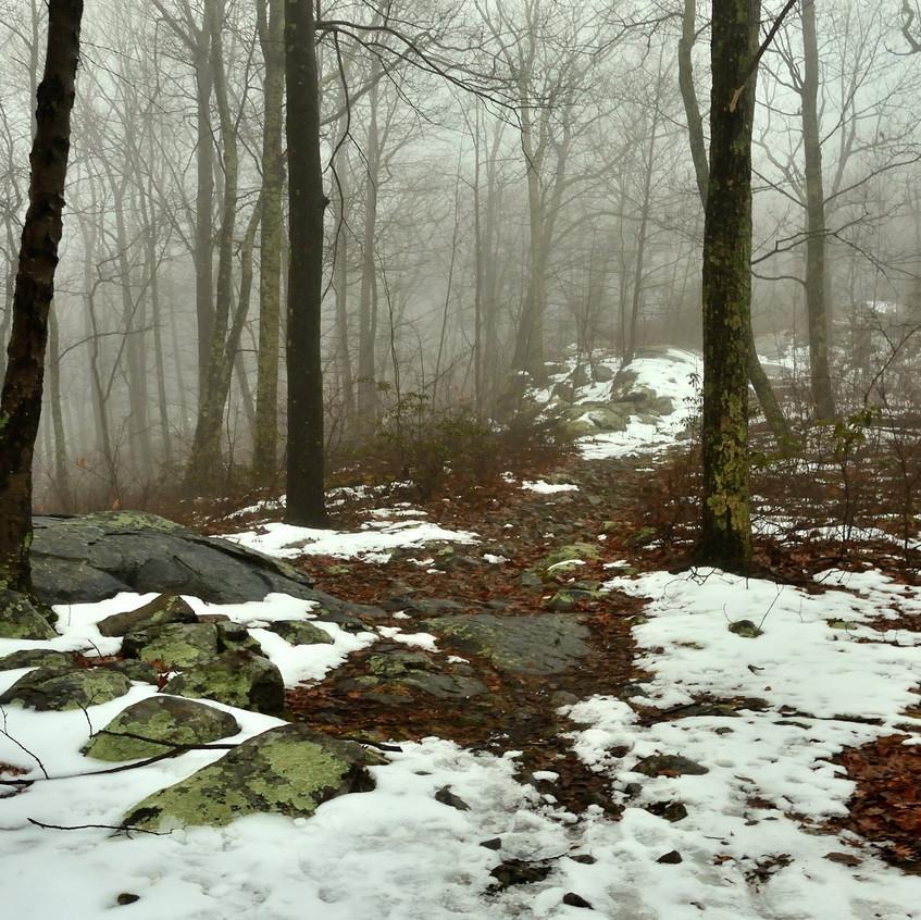 Raccoon Ridge