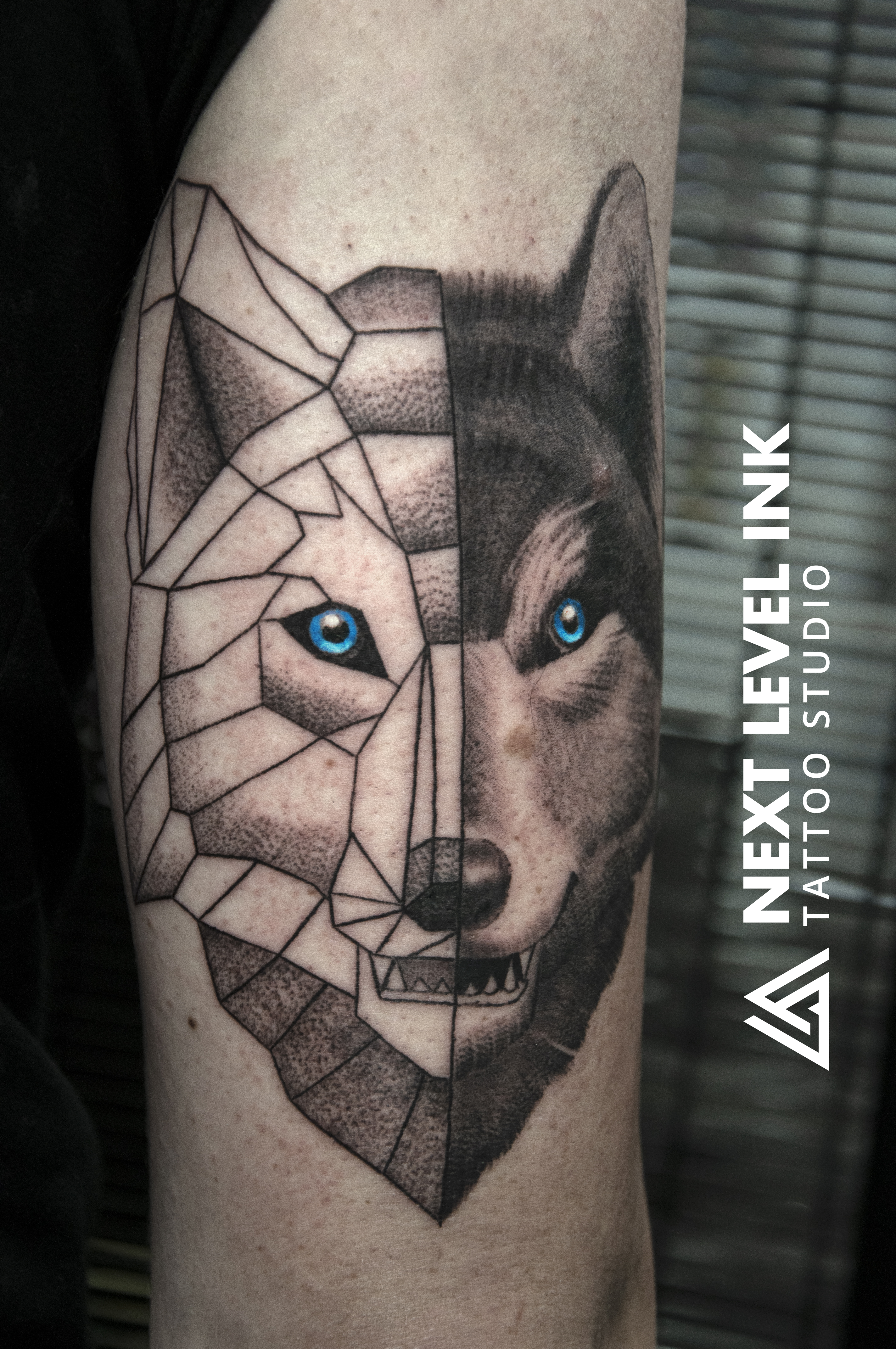 polygonwolf