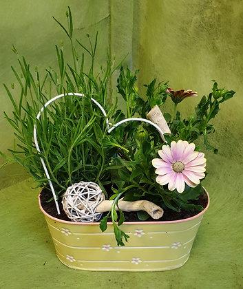 verziertes Blechgefäss bepfl. mit Lavendel u. Kapkörbchen