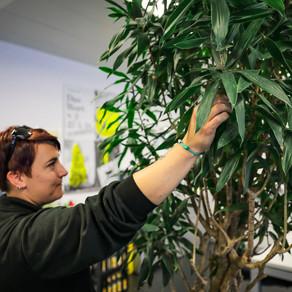 Was wissen wir über die Zimmerpflanzen