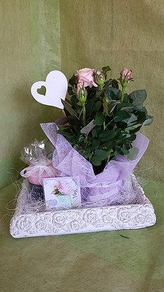 Combo mit Rosenpflanze, Duftkerze und Karte