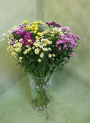 Chrysanthemen klein Blütig