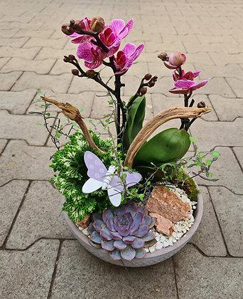 Orchideenschale bepflanzt