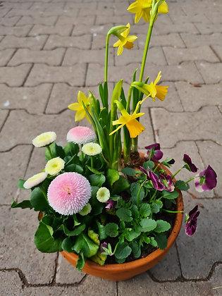Frühlingsschale bepflanzt