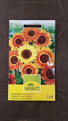 Samen Sonnenblume 'Herbstschönheit'