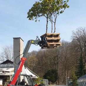 Wenn bei DreamPlant Bäume abheben