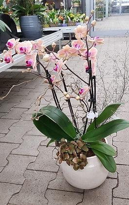 Orchideenschale fertig bepflanzt