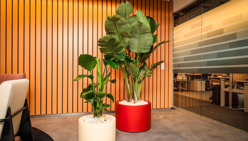 Innenbegrünung, Bürobegrünung, Pflanzenservice, Pflanzenpflege, Zimmerpflanzen, DreamPlant, Mietpflanzen