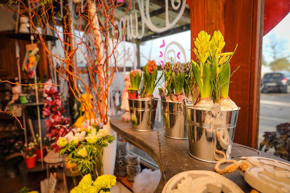 Osterglocken, Geschenksidee, Frühlingsblumen, OnlineShop