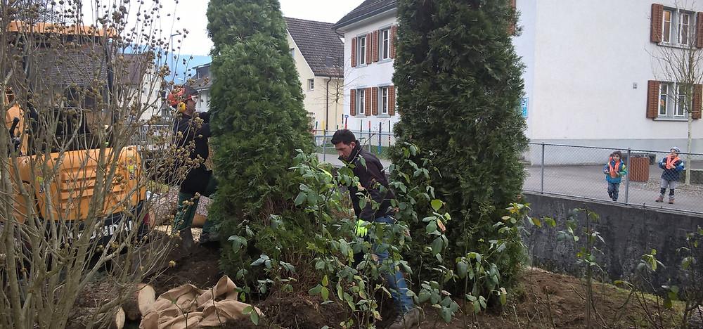 die beste Jahreszeit, Pflanzen setzen, Bagger, Pflanzenpflege, Aussenbegrünung, Begrünung, Gartenbau