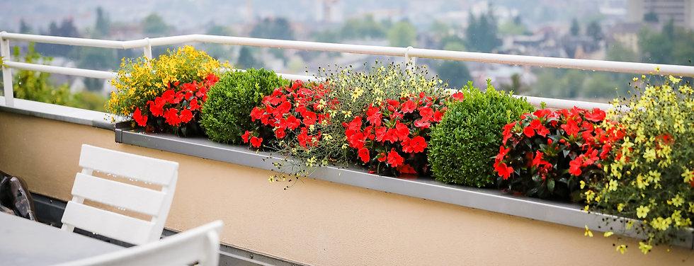 DreamPlant GmbH, Aussenbegrünung, Terrassenbepflanzung, Bewässerungssystem, nachhaltige Gartenpflege, Rückschnitt, Winterschnitt, Sommerschnitt, Baumpflege, Pflanzenpflege
