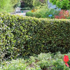 Gartenunterhalt für perfekte Schönheit