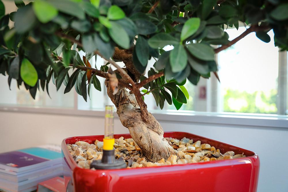 Pflanzenservice, Raumbegrünung, Pflanzenpflege, Innenbegrünung, DreamPlant, Mietpflanzen, Vollservice