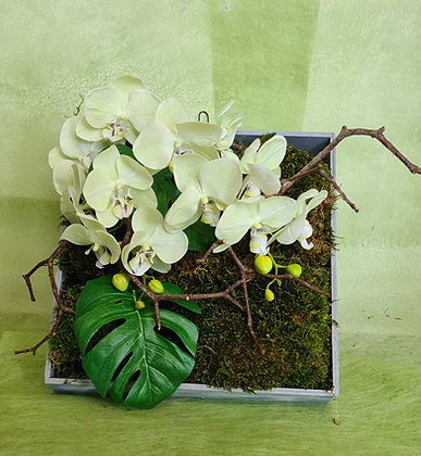 Orchideenbild Moos echt, Orchidee künstlich cremefarbig