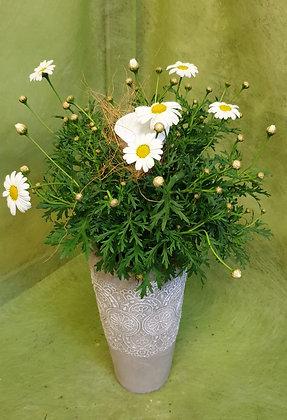 Tongefäss bepfl. mit Margaritenbusch