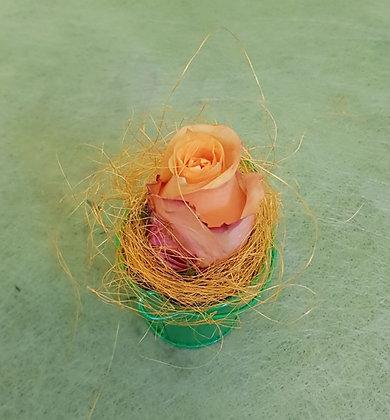 Rosengesteck orange im Töpfli