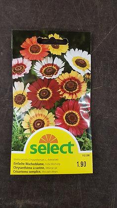 Samen Einfache Wucherblume