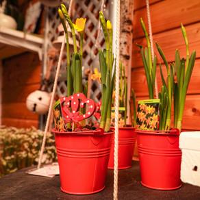 """Am 12. März feierten wir den  """"Pflanz eine Blume Tag"""" mit einer kleinen Überraschung!"""