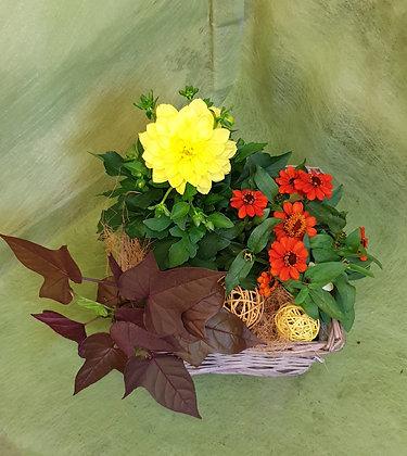 Bepflanzter Korb rechteckig mit Dhalie und Zinnien