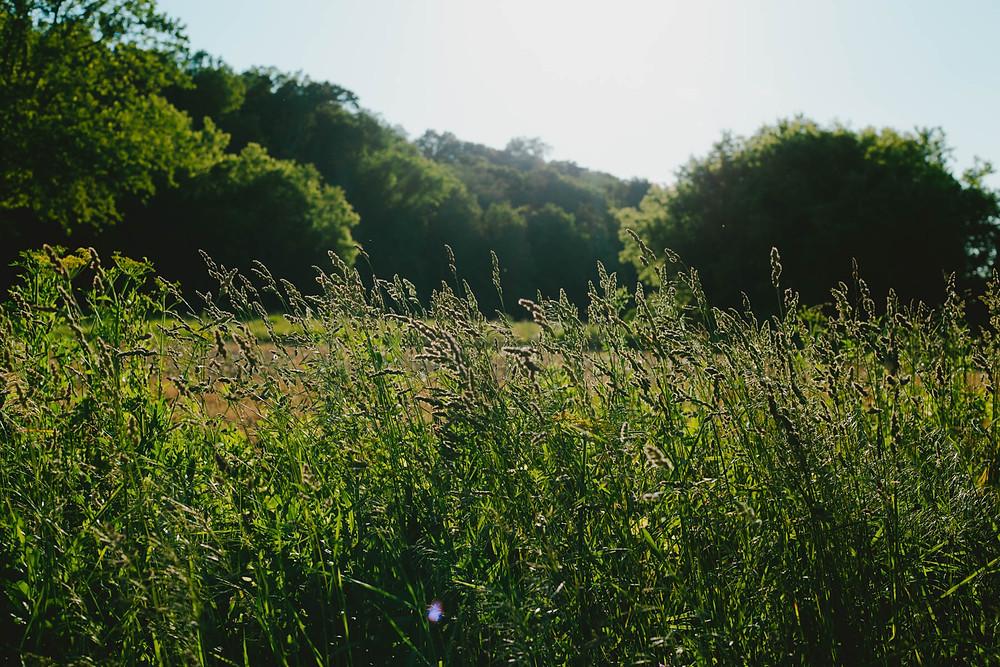 rural wisconsin landscape