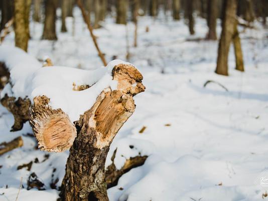 Ice Age Trail | Merrimac, WI